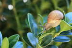 little snail by chi001