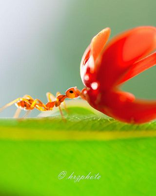 Slurpp.. by hirza