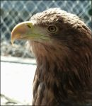 Eagle Eyed by Estruda