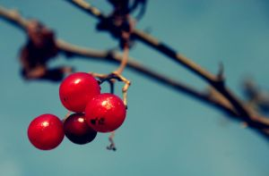 Cherry Red by CountryBumkin