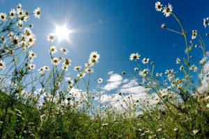 Summer sky with camomiles by Sulde