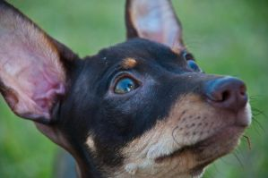 Min Pin by terryrunion