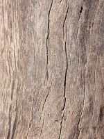 Texture tronco - wood - madera by sangrenegrv