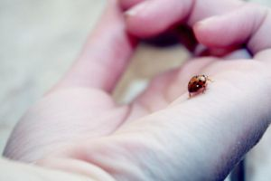 Ladybird 3 by Emiliee91