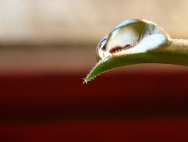 Water Drop by VadRoli