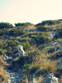My dog climbing up the hill. by mademoiselle8lea