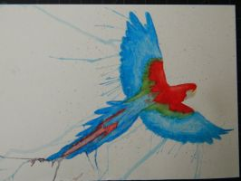 Macaw Watercolor by LexyLou16