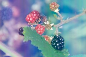 sweet berries by Tahila