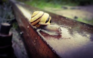 Snail on the Rail by ixada