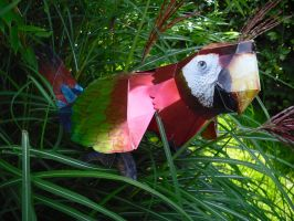 Scarlet Macaw papercraft by TimBauer92