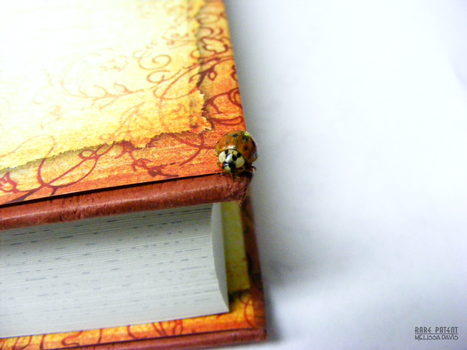 A ladybug on a book by Rare-Patent