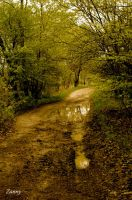 Puddle by Lucy777