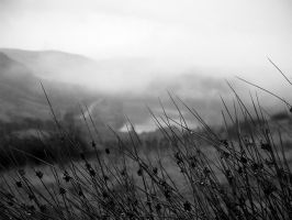 Misty Outlook by Spectral-Lucidity
