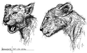 lioness sketches 300614 by heminder