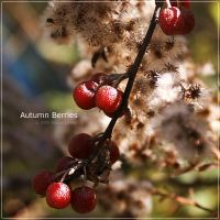 Autumn Berries by Mr-Heli