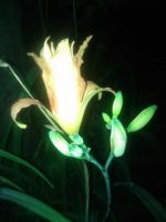 flower at night by KdawgBurger12