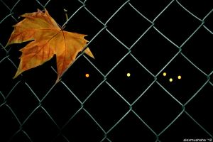 Chained leaf by alexmuahaha