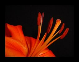 in living colour iii by cdaile