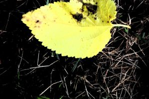 yellow leaf and grass. by StillSouthern