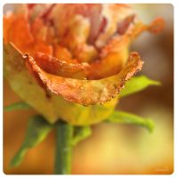 3d macro rose by Damiano79