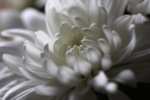White Mum by SpawnedImages