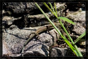 Lizard 12 / Carrying home by deaconfrost78