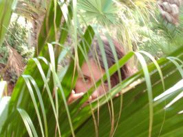 Through the Palm Leaves by kerkera