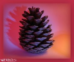 reloaded-pine cone by WERAQS