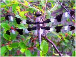 Rainy day dragonfly by EpicLevelSorcerer