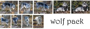 wolf pack by syccas-stock
