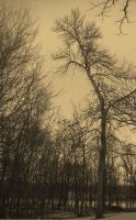 Old Tree by BlueArctic4