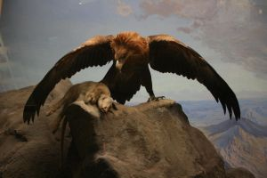 Eagle Wing2 by newdystock