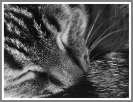 Le Chat Endormi by orphicfiddler