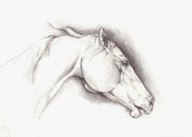 the white mare by howlinghorse