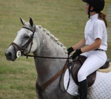 STOCK Showjumping 457 by aussiegal7