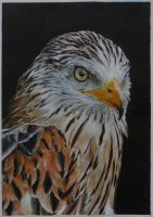 Red Kite by LukeT66