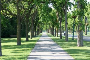 Path in Assiniboine Park by zootnik