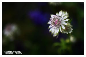 Floating Bloom by PicTd