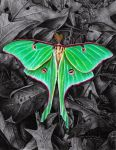 Actias luna by youngmoons