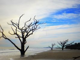 Naked Trees at the Beach by zumbaqueen