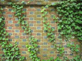 111. Viney Brick Wall by mynti-stock