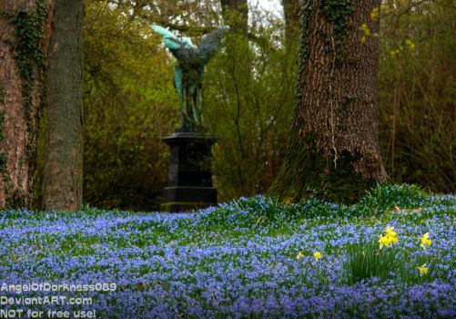 Scilla Flowers on old Cemetery - Germany 2017 by AngelOfDarkness089