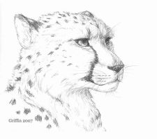Cheetah by SilverFlight