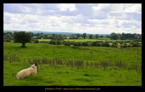 Ireland Country Side by fluffyvolkswagen