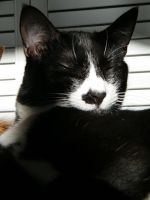 Catnap in the sun by Etsumi-chan-san