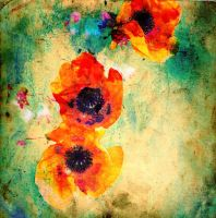 Poppies02 by horstdesign