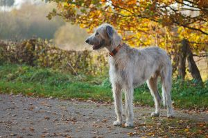 .: A dog walk in Fall :. by Frank-Beer