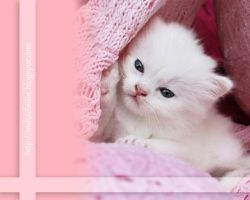 Soft wallpaper 1240x1024 no. 2 by colorful-child