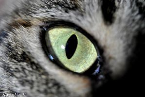 my cat's eye by AngelicPicture