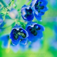 the blues and the greens by Julietsound